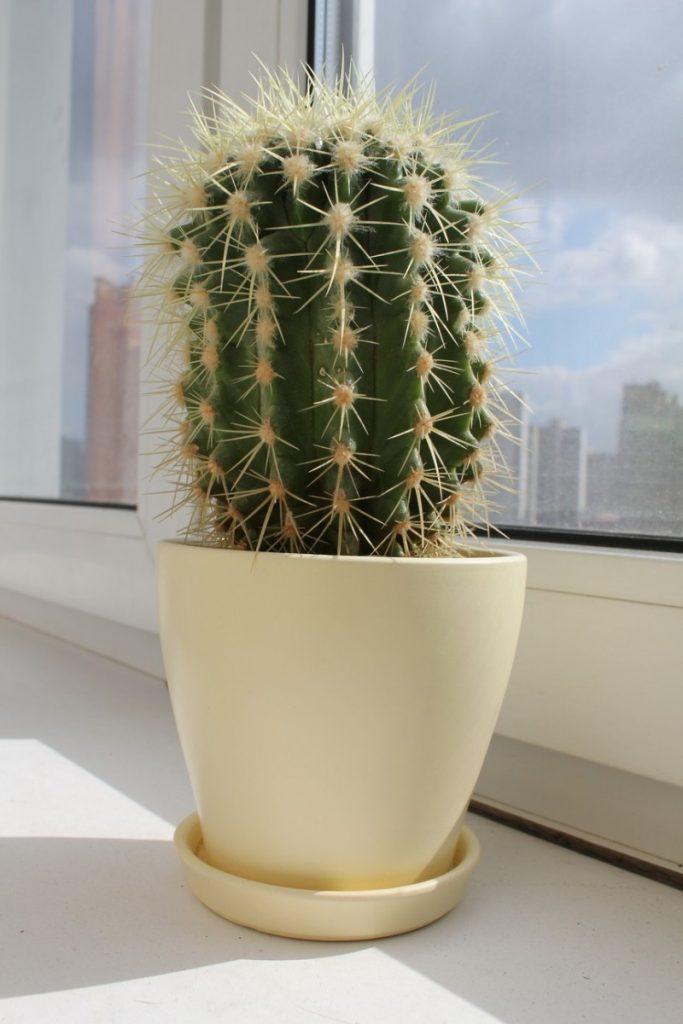 Поздравить, картинки комнатные растения кактус