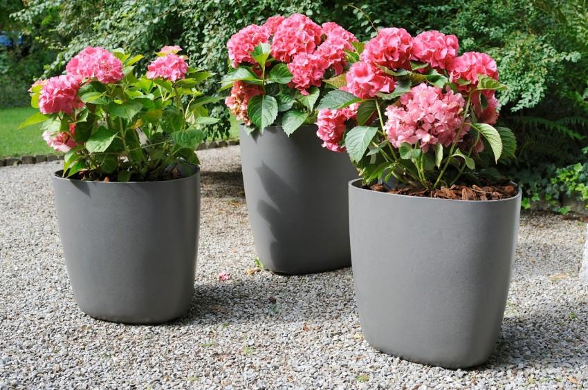 TSvetochnyie-gorshki-1 Как выбрать горшки для комнатных цветов и растений