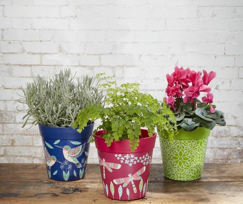TSvetochnyie-gorshki Как выбрать горшки для комнатных цветов и растений