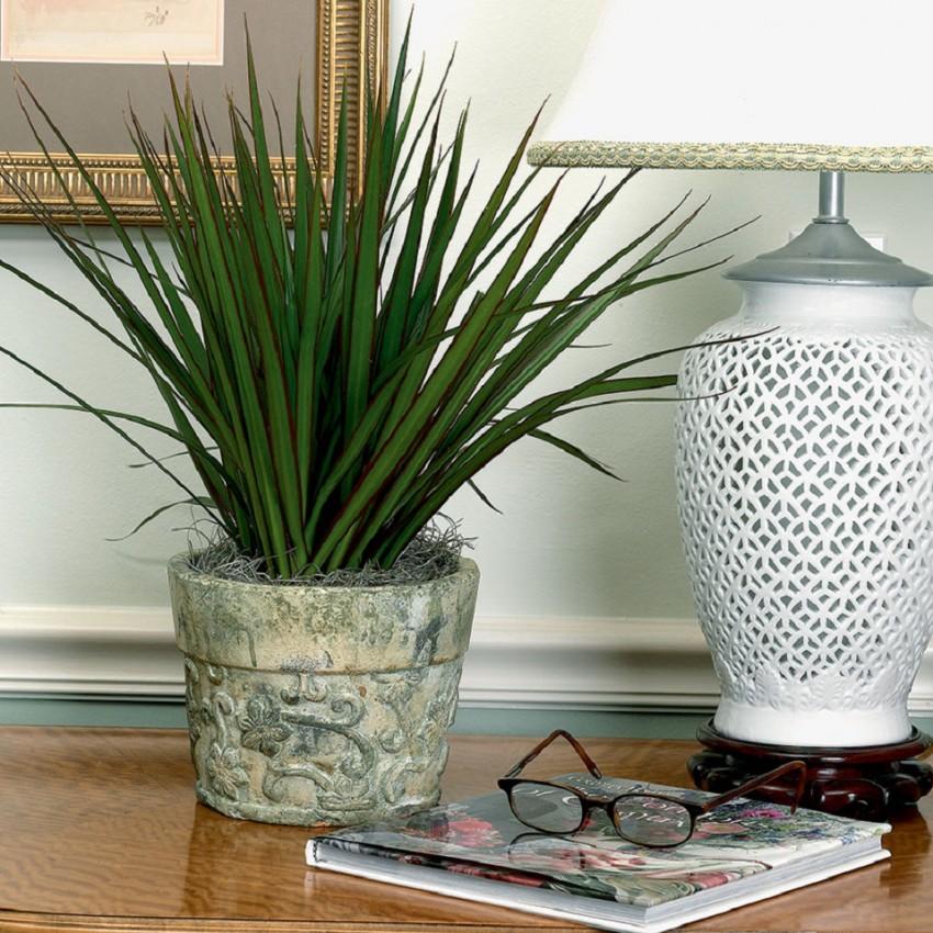 Виды декоративных пальм